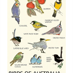 Birds of Australia Bird Wall Art - Educational Bird Art  Print A4 print