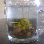 Gel wax candle with turtle