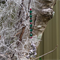 Emerald, Siam & Mocha Swarovski Tiger Suncatcher